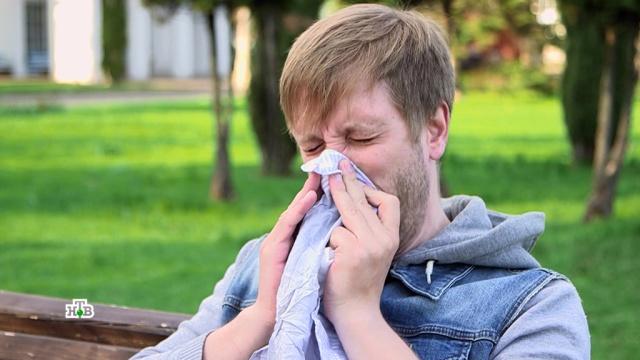 Почему аллергия становится всемирной эпидемией.аллергия, здоровье.НТВ.Ru: новости, видео, программы телеканала НТВ