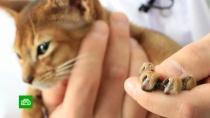 Свердловский парламент одобрил идею запретить удаление кошачьих когтей.Свердловская область, животные, законодательство, кошки.НТВ.Ru: новости, видео, программы телеканала НТВ