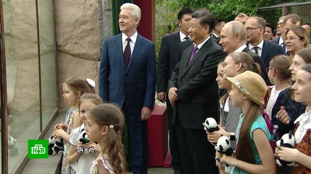 Путин и Си Цзиньпин навестили панд в Московском зоопарке.Китай, Путин, зоопарки, панды.НТВ.Ru: новости, видео, программы телеканала НТВ