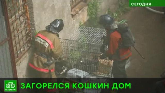 В Петербурге спасли из огня десятки питомцев приюта для животных.Санкт-Петербург, животные, пожары, приюты для животных.НТВ.Ru: новости, видео, программы телеканала НТВ