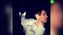 КотАлибасова заработал 150 тысяч долларов за два дня.Кот Чуча, чей хозяин Бари Алибасов в настоящий момент находится в реанимации со страшным ожогом желудка, может стать героем рекламных роликов известных производителей.Алибасов, животные, знаменитости, кошки, шоу-бизнес.НТВ.Ru: новости, видео, программы телеканала НТВ