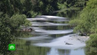 ВКалужской области ищут виновников массовой гибели рыбы вреке Протве
