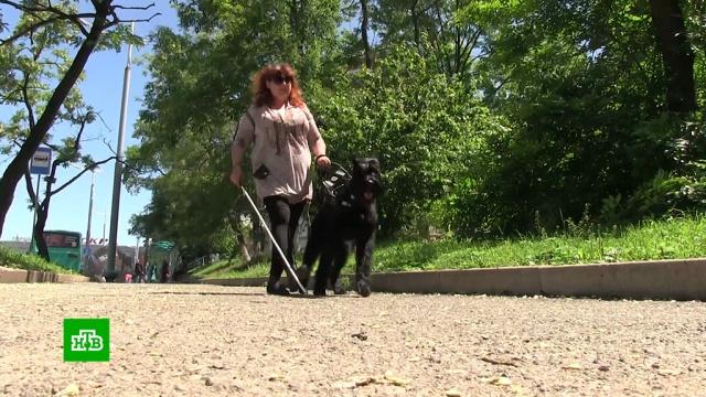 Собаку незрячей жительницы Владивостока отказываются признавать поводырем.Владивосток, животные, инвалиды, собаки.НТВ.Ru: новости, видео, программы телеканала НТВ