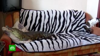Россиянам запретили жить спауками икрокодилами