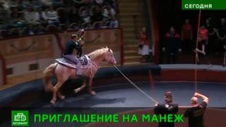 Братья Запашные провели в Петербурге репетицию при зрителях