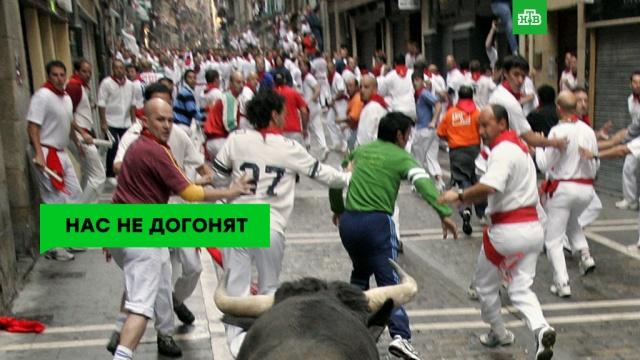 Кровавая традиция: смертоносный фестиваль Сан-Фермин.НТВ.Ru: новости, видео, программы телеканала НТВ