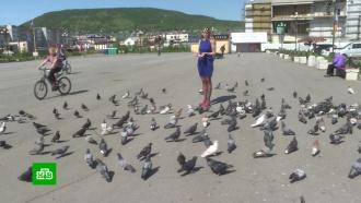 Штраф за кормление голубей прокуратура Магадана признала незаконным
