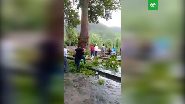 ВАзербайджане 19человек пострадали из-за падения ветки 500-летней чинары.Азербайджан, несчастные случаи.НТВ.Ru: новости, видео, программы телеканала НТВ