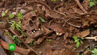На дачном участке нашли братскую могилу с20расстрелянными