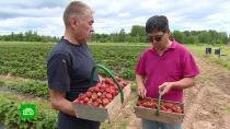 Корреспондент НТВ познакомился спервыми владельцами ленинградских гектаров