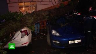 Огромное дерево рухнуло на припаркованные автомобили вМоскве