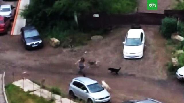 Свора бродячих собак напала на девушку в Красноярске.Красноярск, нападения, собаки.НТВ.Ru: новости, видео, программы телеканала НТВ