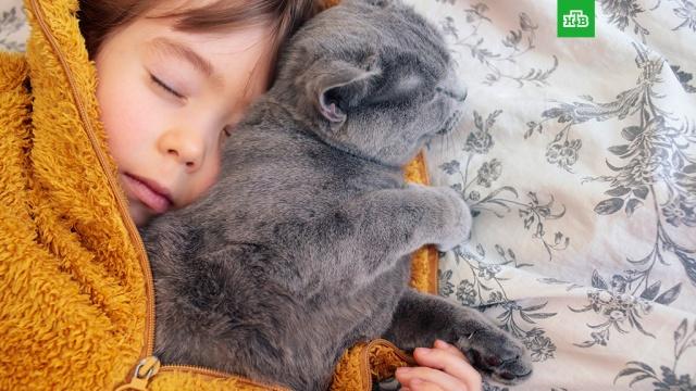 Простой способ быстро заснуть и хорошо выспаться.В Университете Техаса выяснили, что теплая ванна поможет быстрее уснуть и заметно улучшит качество сна.здоровье, наука и открытия, сон.НТВ.Ru: новости, видео, программы телеканала НТВ