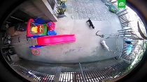 Две таксы пожертвовали собой ради спасения ребенка от кобры: видео.Таксы Мокси и Майли атаковали во дворе ядовитую змею, которая пыталась пробраться в спальню к ребенку. Битву не на жизнь, а на смерть сняла камера наблюдения.Филиппины, дети и подростки, змеи, собаки.НТВ.Ru: новости, видео, программы телеканала НТВ