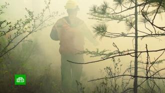 Тысячи жителей Сибири требуют усилить борьбу слесными пожарами