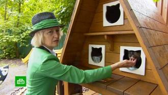В Калининградской области кошачий омбудсмен стала знаменитостью