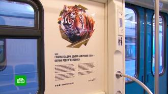 По серой ветке московского метро пустили «Полосатый экспресс»