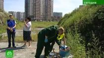 Экологи и петербуржцы требуют ликвидировать курганы с золой и мусором в Невском районе