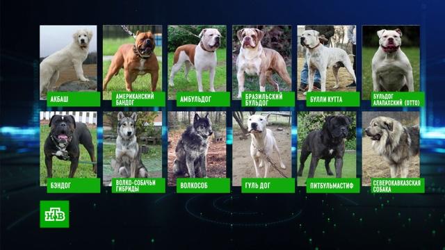Список опасных пород собак.правительство РФ, собаки.НТВ.Ru: новости, видео, программы телеканала НТВ