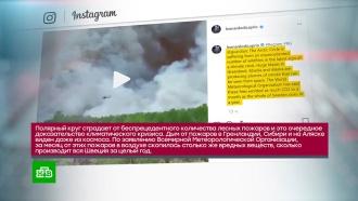 Ди Каприо извезды <nobr>шоу-бизнеса</nobr> призвали спасти Сибирь от лесных пожаров