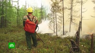 Пожары вСибири: из тайги массово бегут олени, лоси идругие звери