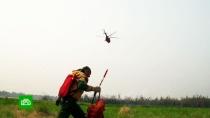 Роспотребнадзор проверит наличие вредных веществ врайоне лесных пожаров