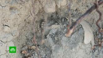 «Люди слоями лежат»: на дороге в Крыму нашли человеческие кости