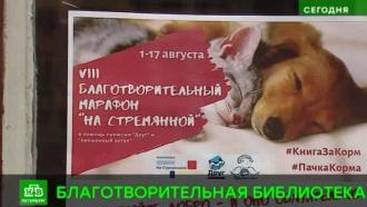 Петербургская библиотека спасет бездомных животных
