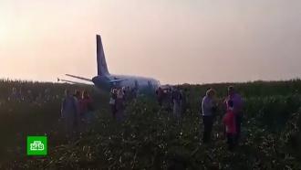 «Посадили птичку»: пассажиры благодарят экипаж севшего вкукурузном поле А321