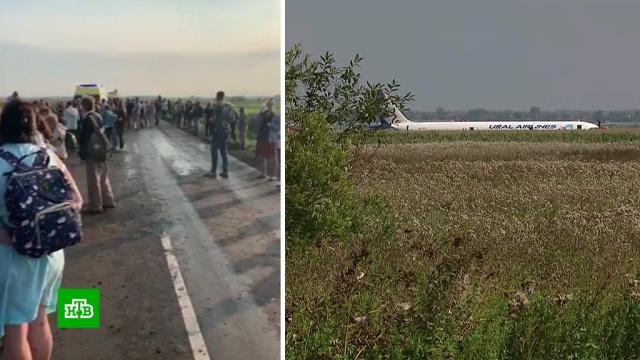 Число пострадавших после аварийной посадки А321увеличилось до 74.Московская область, авиационные катастрофы и происшествия, самолеты.НТВ.Ru: новости, видео, программы телеканала НТВ