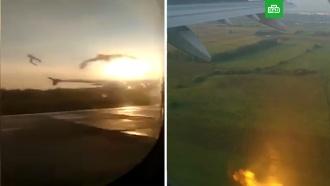 Столкновение чаек слайнером A321