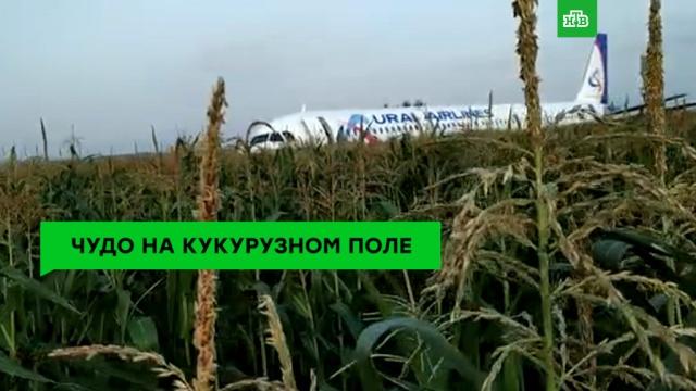 Рейс MH17: пять лет спустя.НТВ.Ru: новости, видео, программы телеканала НТВ