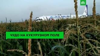 Чудо на кукурузном поле: пилоты спасли жизнь 226пассажиров
