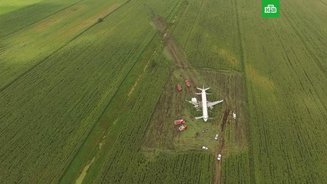 Жестко севший на кукурузное поле A321 сняли на видео с дрона.авиационные катастрофы и происшествия, Московская область, самолеты.НТВ.Ru: новости, видео, программы телеканала НТВ