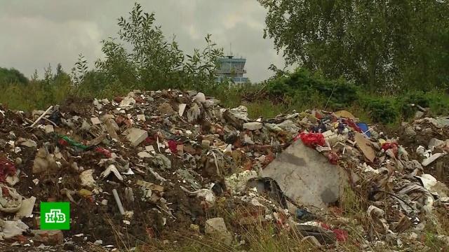 Уаэропорта Жуковский нашли горы мусора иопасных для самолетов чаек.Московская область, авиационные катастрофы и происшествия, мусор, птицы, самолеты, экология.НТВ.Ru: новости, видео, программы телеканала НТВ