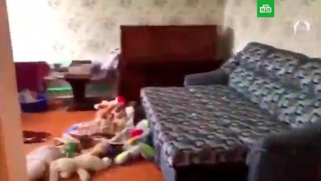 Видео из дома убившего семью подростка.дети и подростки, жестокость, самоубийства, смерть, убийства и покушения, Ульяновская область.НТВ.Ru: новости, видео, программы телеканала НТВ