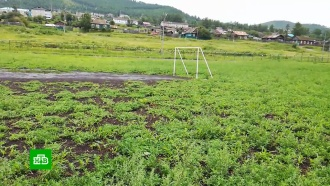 На стадионе российского города уничтожили плантацию конопли