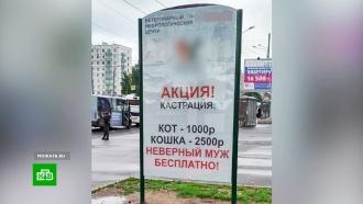 Петербургской ветклинике после скандала пришлось убрать рекламу о «кастрации мужей»