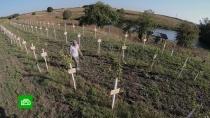В Курской области появился «Сад памяти»