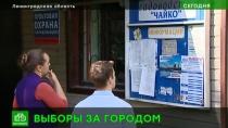 Выборы для дачников: где и как будут голосовать за губернатора садоводы из Петербурга
