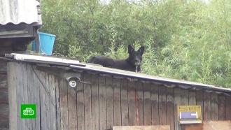 В Комсомольске-на-Амуре спасли из воды двух привязанных к будке собак