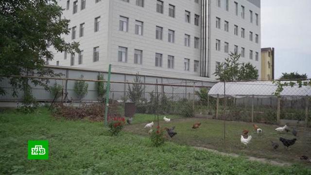 Жители Краснодара добиваются сноса незаконно построенного бизнес-центра.Краснодар, скандалы, строительство, суды.НТВ.Ru: новости, видео, программы телеканала НТВ