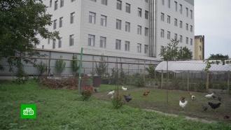 Жители Краснодара добиваются сноса незаконно построенного бизнес-центра