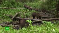 Как российские зоозащитники спасают диких животных
