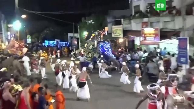 Слон взбесился ипокалечил 20человек на празднике вШри-Ланке.Шри-Ланка, животные, торжества и праздники.НТВ.Ru: новости, видео, программы телеканала НТВ