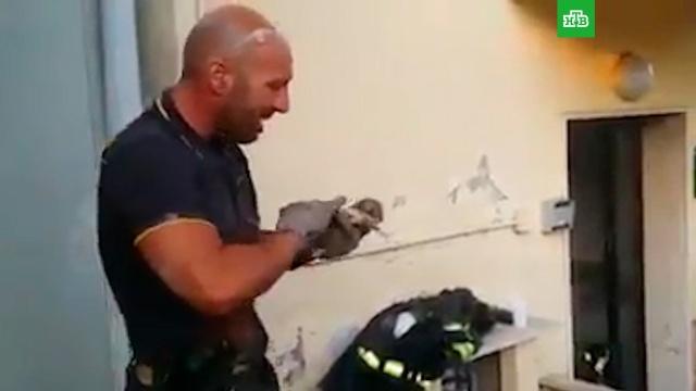 Пожарный не смог сдержать слез после спасения котенка.Италия, животные, кошки, пожары.НТВ.Ru: новости, видео, программы телеканала НТВ