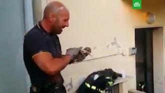 Пожарный не смог сдержать слез после спасения котенка
