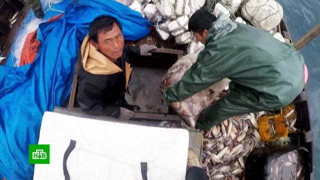 Пойманные на браконьерстве рыбаки из КНДР зашли в российские воды под предлогом шторма.Приморье, Северная Корея, браконьерство, охота и рыбалка.НТВ.Ru: новости, видео, программы телеканала НТВ