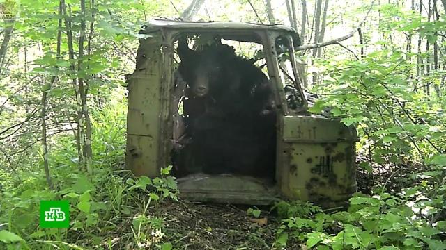 Брошенную влесу кабину грузовика обживают медведи, бурундук иворона.Приморье, животные, медведи.НТВ.Ru: новости, видео, программы телеканала НТВ