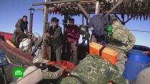 Браконьеры из КНДР хозяйничают в российских водах